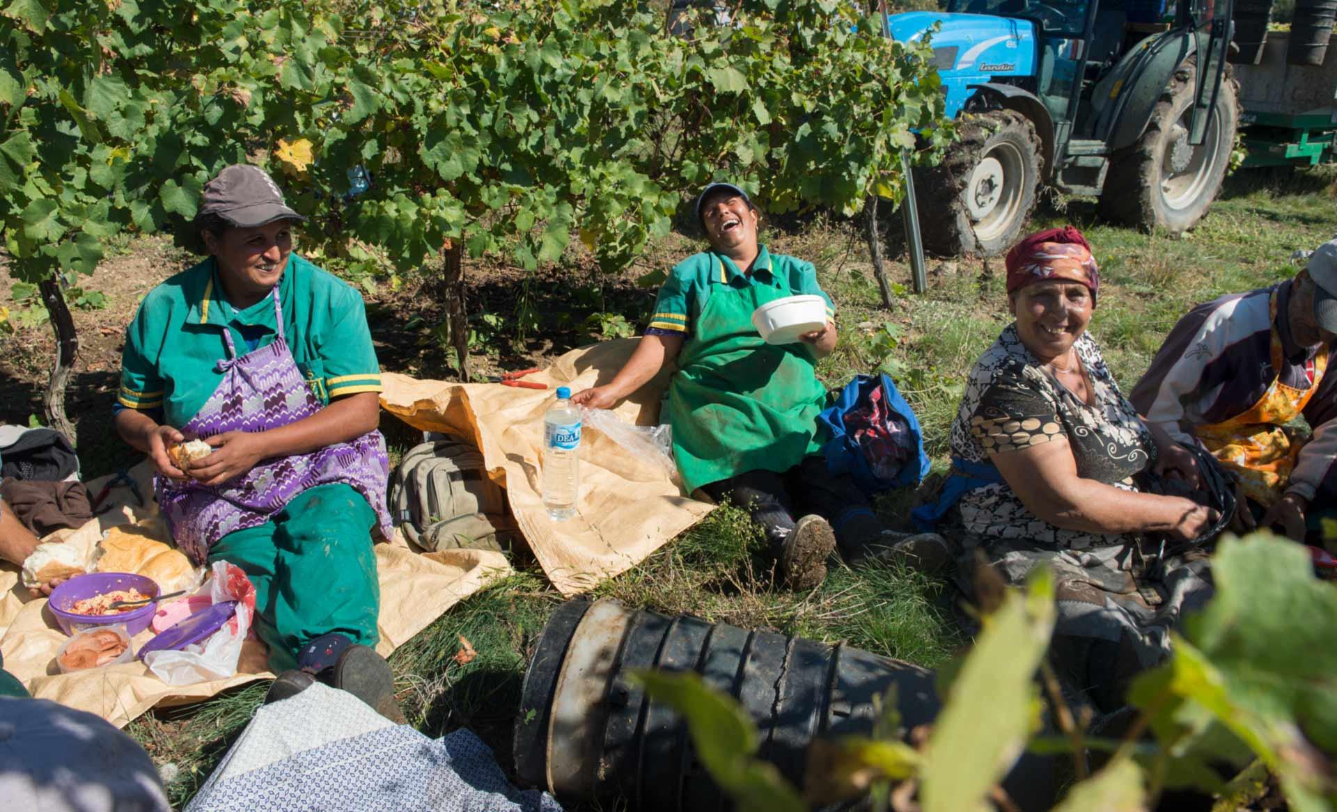 rastar under vinproduktion